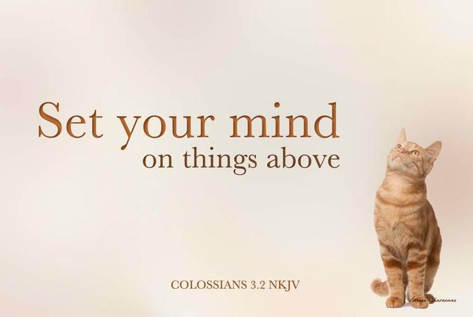 Col 3.2 verse